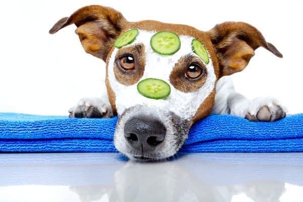Hunde skal ikke behandles som mennesker