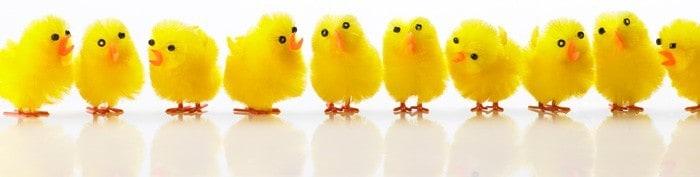 Påskekyllingerne er nu klar til påsken